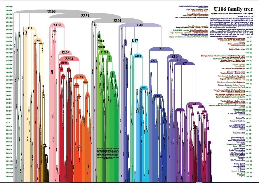 U106 family tree